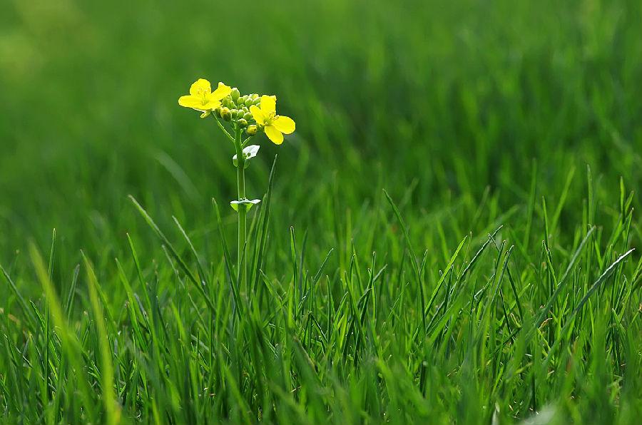 春天的雨是连绵的柔和的